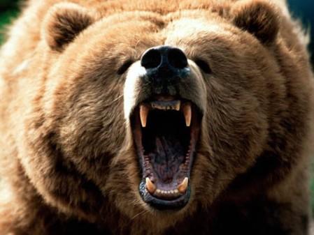 Scary-ass bear...