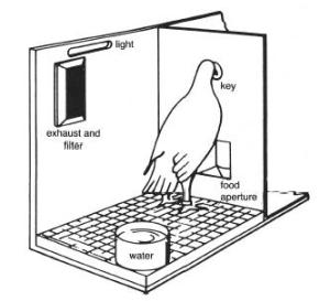 Operant conditioning chamber