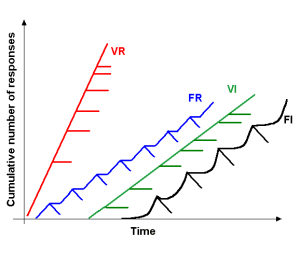 Variable ratio, fixed ratio, variable interval, and fixed interval reward schedules