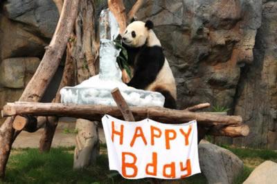panda-birthday